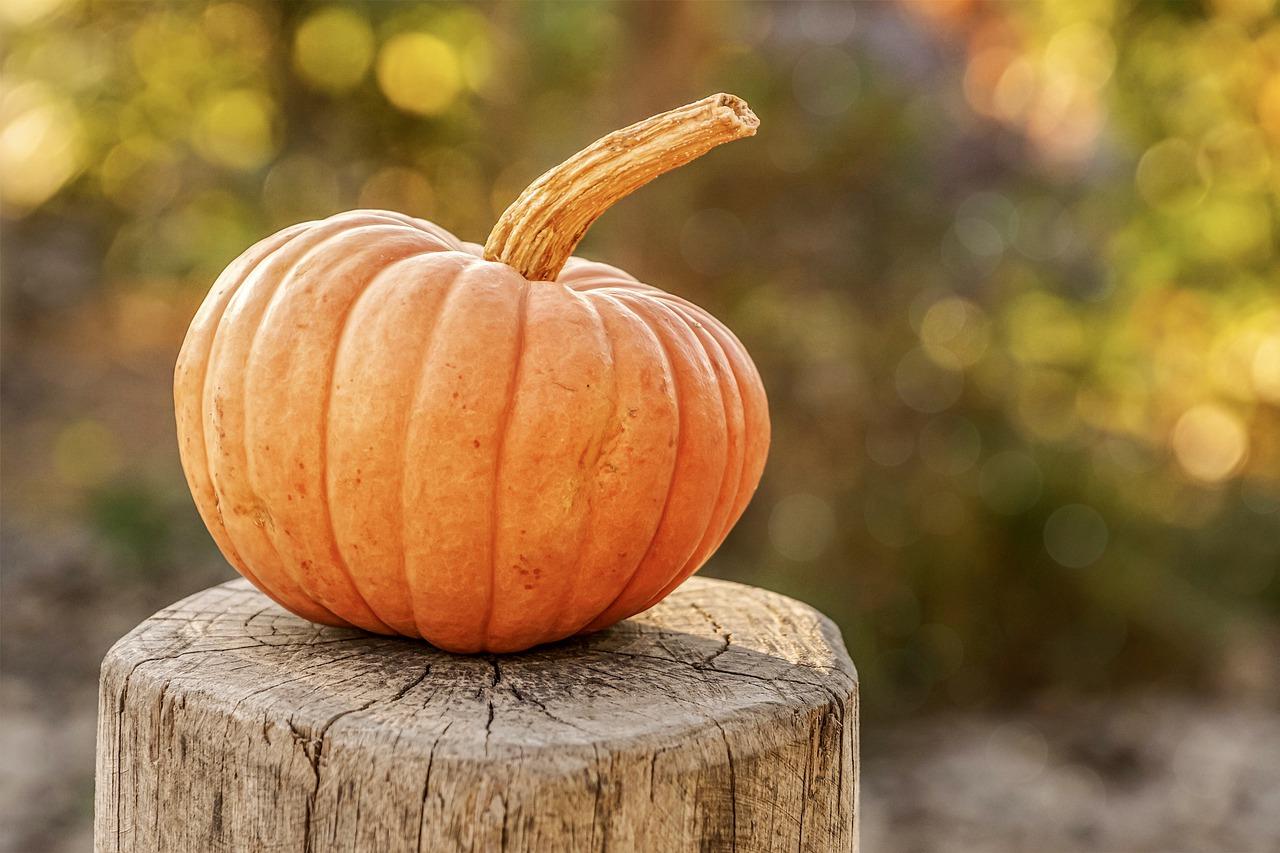 Animacje Halloweenowe - Danimatoring.pl zdjęcie nr 1